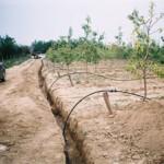 Fotografije instaliranih sistema kap po kap - Neštin Jun 2007.