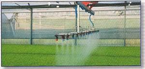2-zalivanje-rasada-u-plastenicima-urbinati
